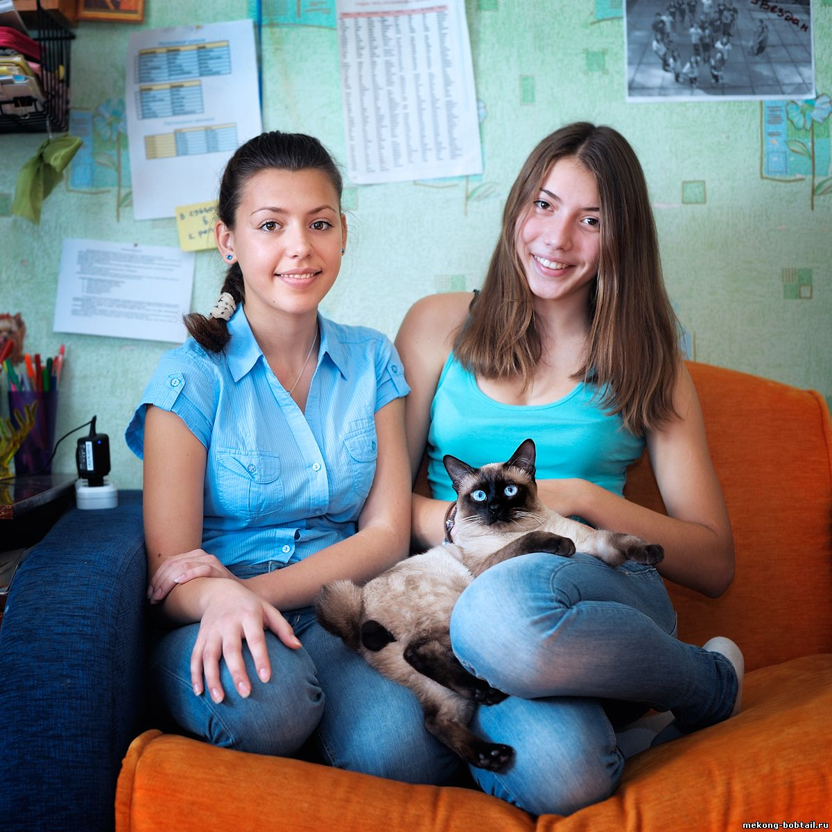 тайский бобтейл кот сил-пойнт