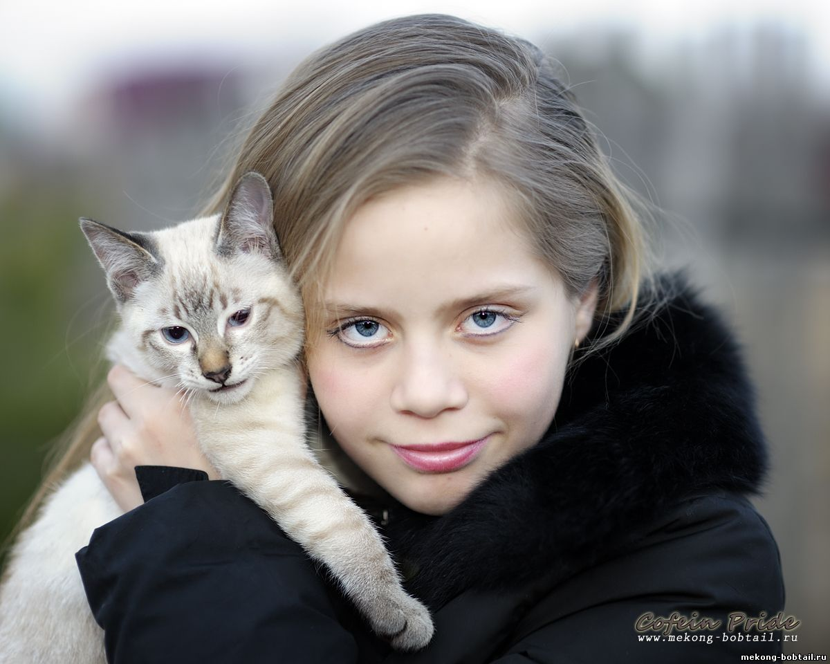 bobtail cat and girl