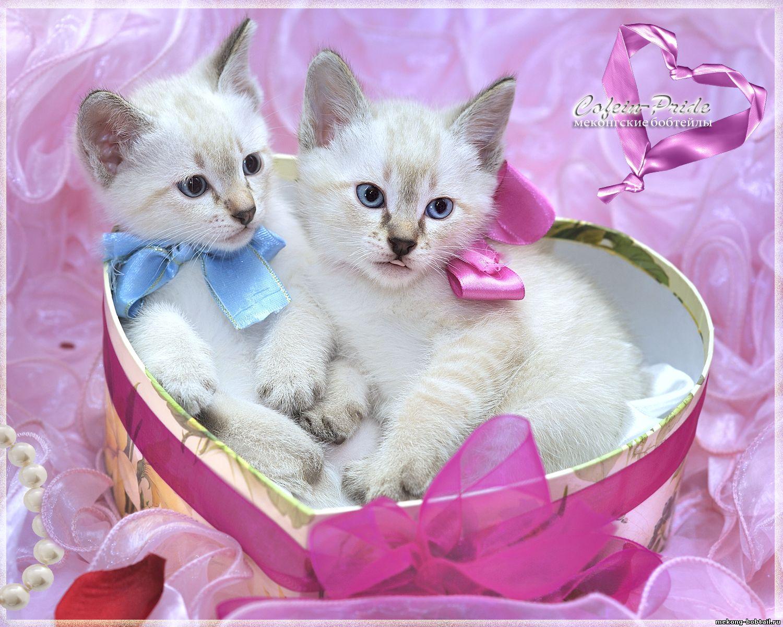 Открытка для любимой с котятами 593