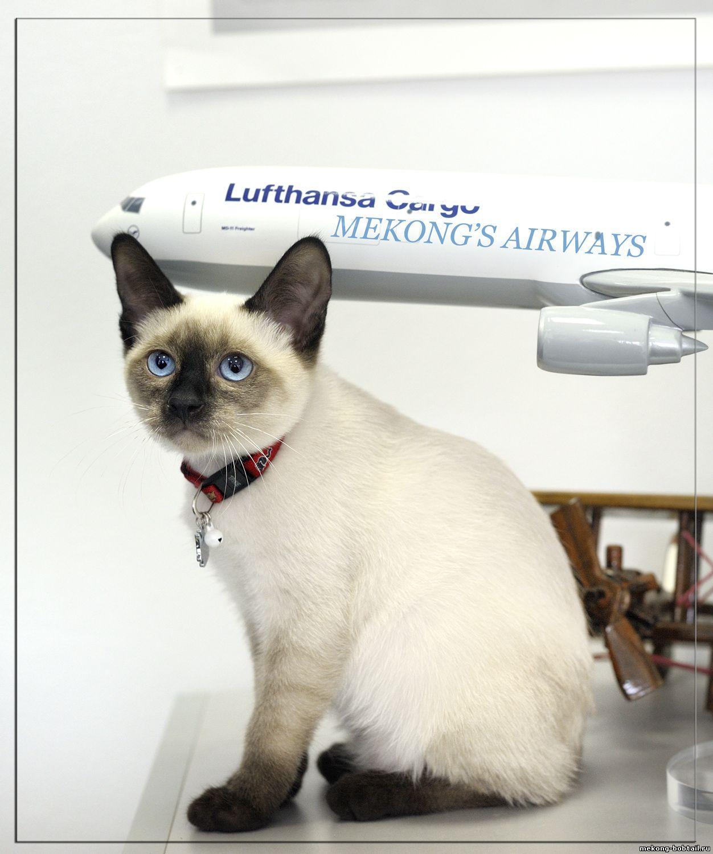 Доставка кошек и котят по России и за рубеж