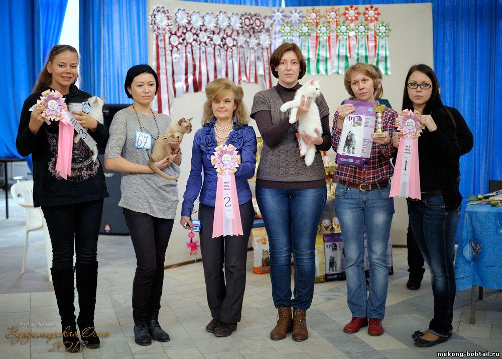 выставка кошек во Владимире